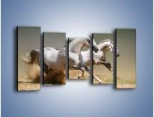 Obraz na płótnie – Białe konie w pustynnym galopie – pięcioczęściowy Z055W2