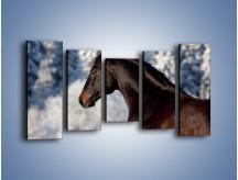 Obraz na płótnie – Brązowy ogier na zimowym spacerze – pięcioczęściowy Z056W2