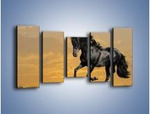 Obraz na płótnie – Bieg z koniem po polanie – pięcioczęściowy Z057W2