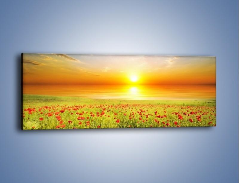 Obraz na płótnie – Maki na słońcu – jednoczęściowy panoramiczny KN1071