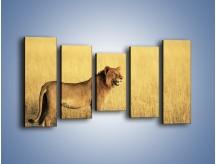 Obraz na płótnie – Czujny wzrok lwicy – pięcioczęściowy Z091W2