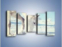 Obraz na płótnie – Arab w śnieżnym puchu – pięcioczęściowy Z144W2