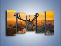 Obraz na płótnie – Ciężkie poroże jelenia – pięcioczęściowy Z165W2