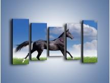 Obraz na płótnie – Dziki koń w biegu – pięcioczęściowy Z194W2