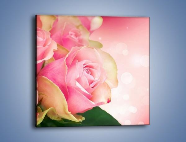 Obraz na płótnie – Różowa róża w świetle – jednoczęściowy kwadratowy K001