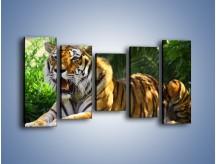 Obraz na płótnie – Cała duma tygrysa – pięcioczęściowy Z199W2