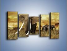 Obraz na płótnie – Drogocenne kły słonia – pięcioczęściowy Z214W2