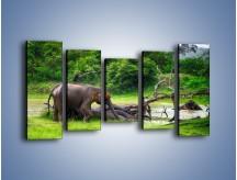 Obraz na płótnie – Kąpiel ze słoniem – pięcioczęściowy Z216W2