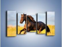 Obraz na płótnie – Dziki koń i jego mięśnie – pięcioczęściowy Z232W2
