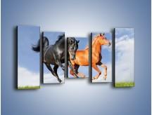 Obraz na płótnie – Czarny rudy i koń – pięcioczęściowy Z241W2