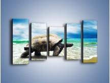 Obraz na płótnie – Jak tu nie kochać żółwi – pięcioczęściowy Z251W2