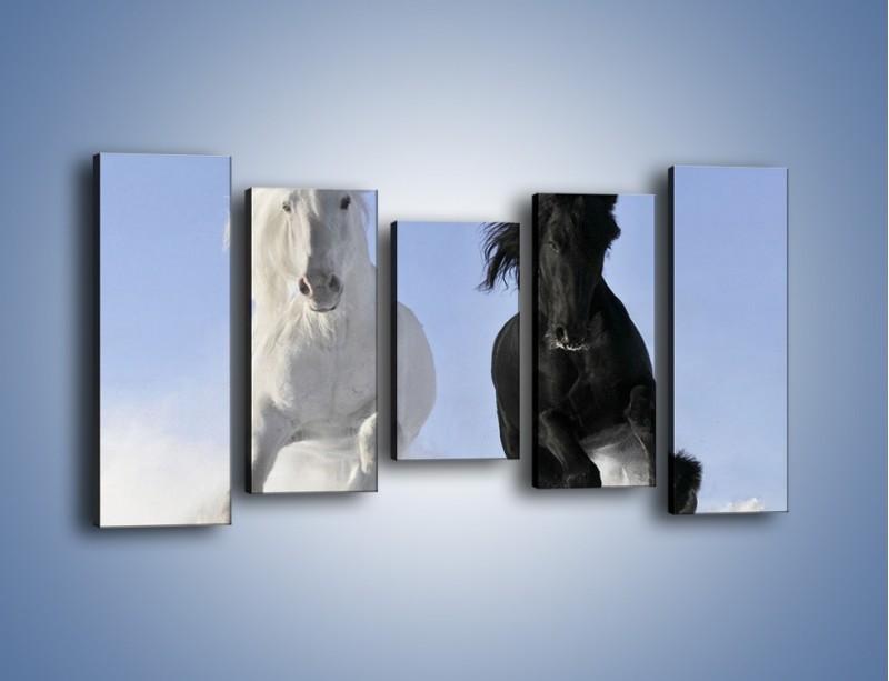 Obraz na płótnie – Czarno-biały wyścig konny – pięcioczęściowy Z263W2