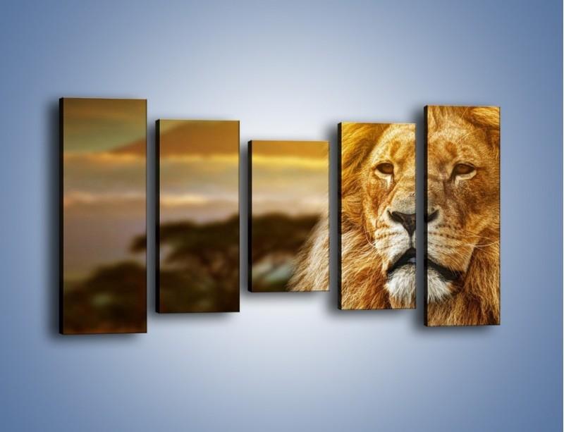 Obraz na płótnie – Dojrzały wiek lwa – pięcioczęściowy Z303W2