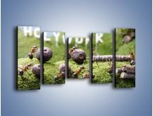 Obraz na płótnie – Ciężka praca mrówek – pięcioczęściowy Z308W2