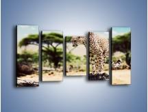 Obraz na płótnie – Cała zwinność geparda – pięcioczęściowy Z315W2