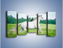 Obraz na płótnie – Biały koń i leśna polana – pięcioczęściowy Z317W2
