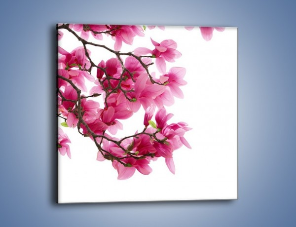 Obraz na płótnie – Kwiat wiśni na drzewie – jednoczęściowy kwadratowy K003