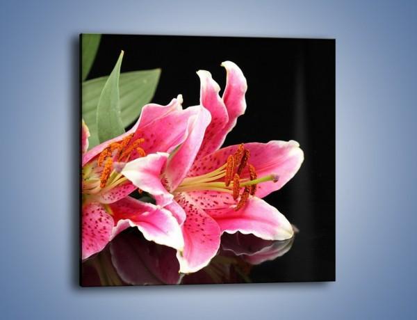 Obraz na płótnie – Rozwinięte lilie na czarnym tle – jednoczęściowy kwadratowy K007