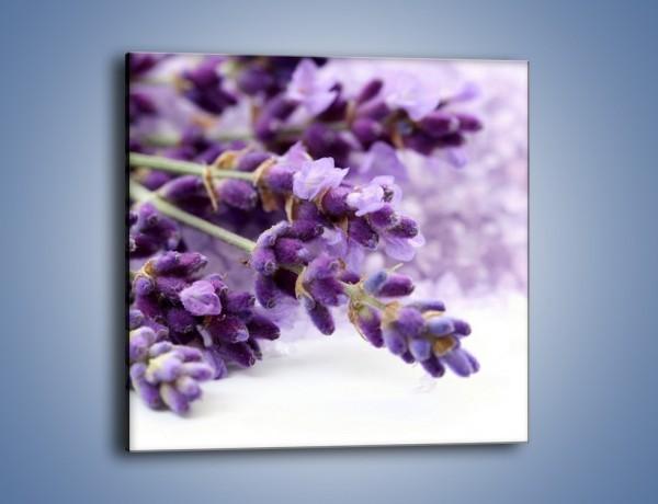 Obraz na płótnie – Kwiat łubinu zimą – jednoczęściowy kwadratowy K015