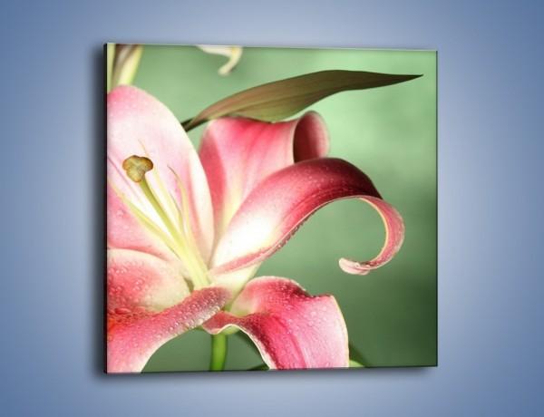 Obraz na płótnie – Kwiat lilii – jednoczęściowy kwadratowy K038