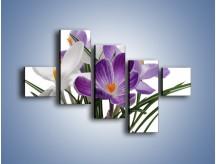 Obraz na płótnie – Biało-fioletowe krokusy – pięcioczęściowy K020W3