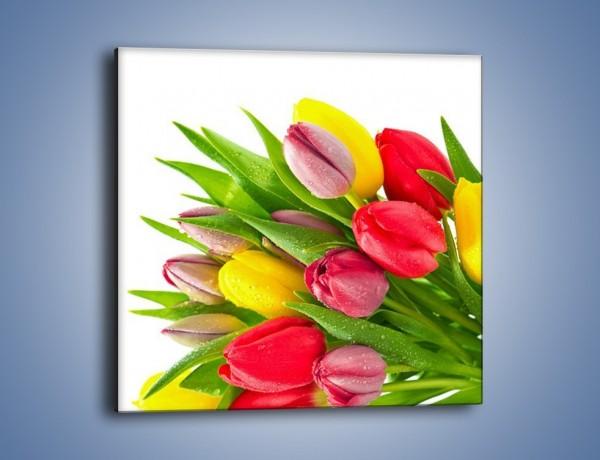 Obraz na płótnie – Kropelki wody na kolorowych tulipanach – jednoczęściowy kwadratowy K049