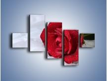 Obraz na płótnie – Bordowa róża na białej pościeli – pięcioczęściowy K1023W3