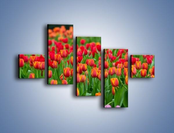 Obraz na płótnie – Tulipanowa rozkosz dla oka – pięcioczęściowy K216W3