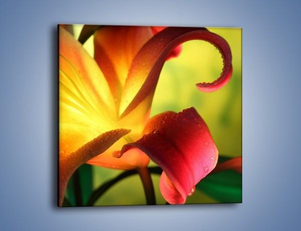 Obraz na płótnie – Rozwinięta lilia w kolorze słońca – jednoczęściowy kwadratowy K054