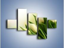 Obraz na płótnie – Białe tulipany na zgodę – pięcioczęściowy K400W3