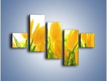 Obraz na płótnie – Skąpane w rosie tulipany – pięcioczęściowy K429W3