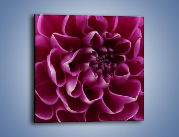 Obraz na płótnie – Dominujący kwiat dalii – jednoczęściowy kwadratowy K056