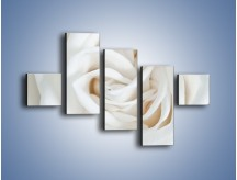 Obraz na płótnie – Biel róży za dnia – pięcioczęściowy K709W3