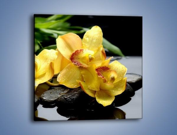 Obraz na płótnie – Żółte storczyki na kamieniach – jednoczęściowy kwadratowy K063