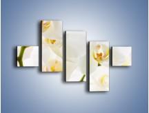 Obraz na płótnie – Białe storczyki blisko siebie – pięcioczęściowy K811W3