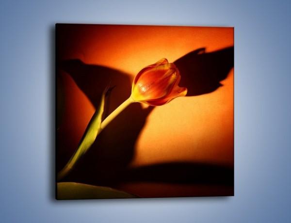 Obraz na płótnie – Tulipan w cieniu – jednoczęściowy kwadratowy K064