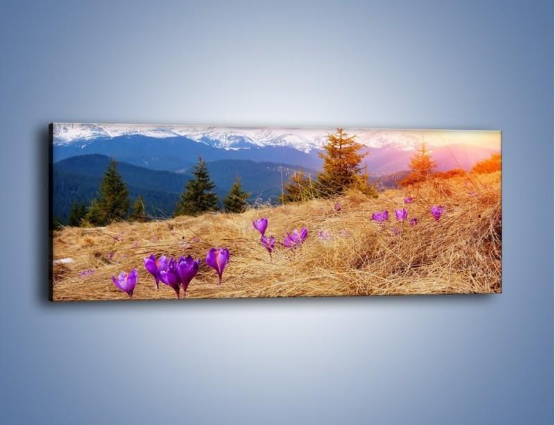 Obraz na płótnie – Przebiśniegi w górach – jednoczęściowy panoramiczny KN1126A