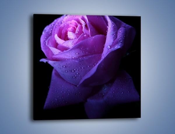 Obraz na płótnie – Róża w samotności – jednoczęściowy kwadratowy K071