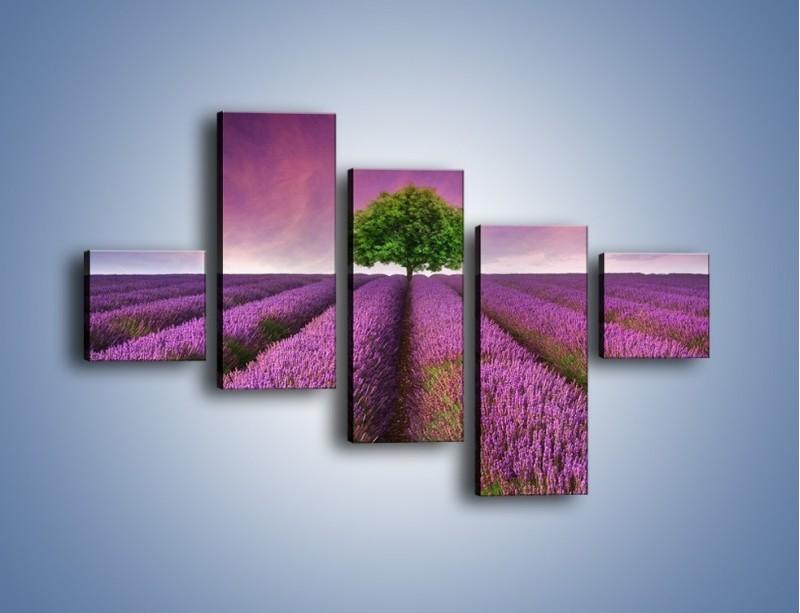 Obraz na płótnie – Droga lawendową do drzewa – pięcioczęściowy KN1158AW3