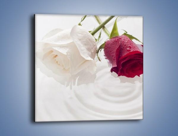 Obraz na płótnie – Róża biała czy czerwona – jednoczęściowy kwadratowy K077