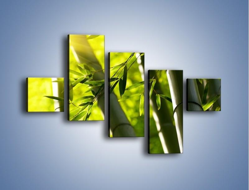 Obraz na płótnie – Twarde łodygi bambusa – pięcioczęściowy KN1314AW3