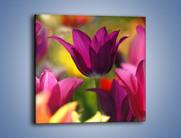 Obraz na płótnie – Tulipan w słonecznej oprawie – jednoczęściowy kwadratowy K078