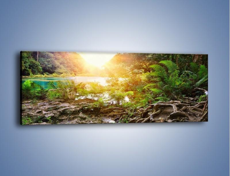 Obraz na płótnie – Konary wśród paproci – jednoczęściowy panoramiczny KN1141A