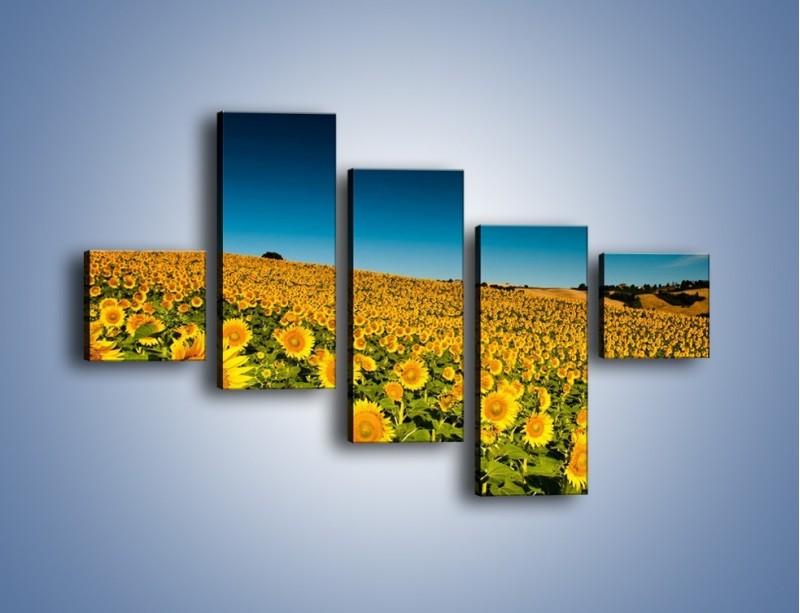 Obraz na płótnie – Słonecznikowe uśmiechnięte główki – pięcioczęściowy KN205W3