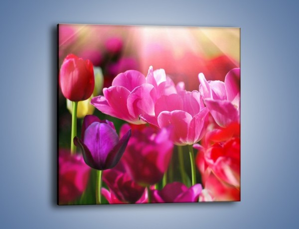 Obraz na płótnie – Tulipany w promieniach słońca – jednoczęściowy kwadratowy K080