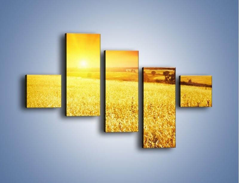 Obraz na płótnie – Zboże złote jak słońce – pięcioczęściowy KN398W3