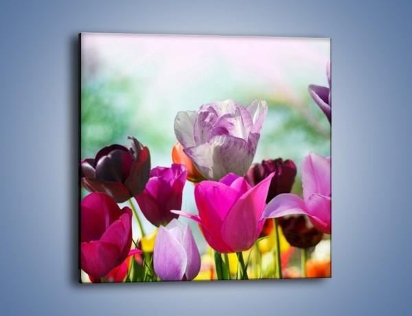 Obraz na płótnie – Tulipany o poranku – jednoczęściowy kwadratowy K081