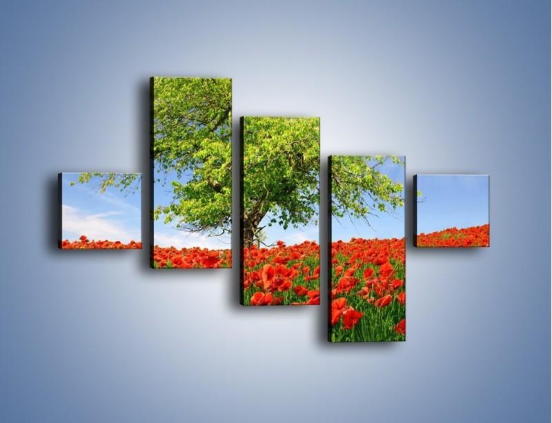 Obraz na płótnie – Cała łąka maków – pięcioczęściowy KN623W3