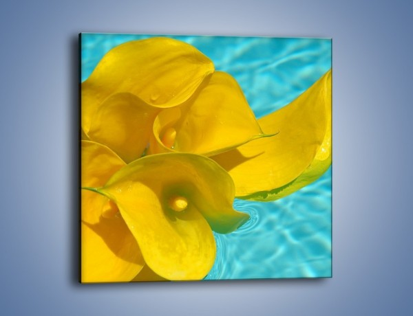 Obraz na płótnie – Żółte kalie na wodzie – jednoczęściowy kwadratowy K082