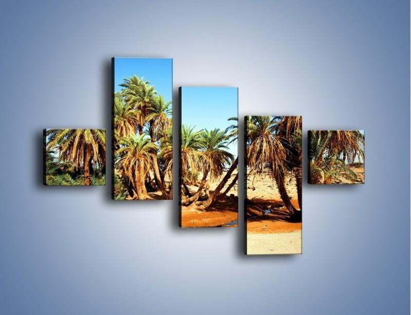 Obraz na płótnie – Palmowa rodzina w komplecie – pięcioczęściowy KN809W3